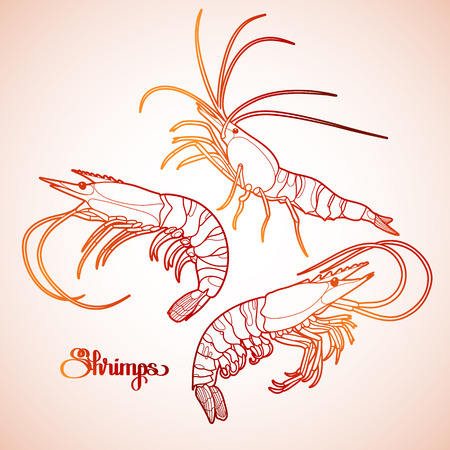 hand line fishing: Graphic vector shrimps collection drawn in line art style. Sea and ocean creature isolated in red colors. Seafood element. Coloring book page design