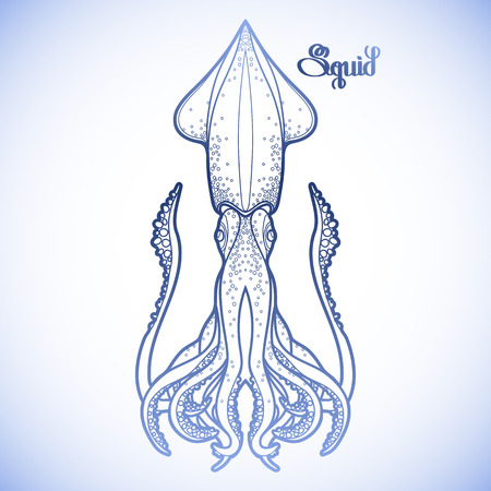 Graphic vector squid drawn in line art style. Sea and ocean creature in blue colors. Coloring book page design