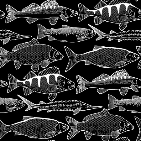 zander: Graphic freshwater fish seamless pattern drawn in line art style. Sturgeon, roach, zander, trout, carp, perch for seafood menu. Freshwater creatures on black background