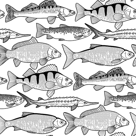 sturgeon: Graphic freshwater fish seamless pattern drawn in line art style. Sturgeon, roach, zander, trout, carp, perch for seafood menu. Freshwater creatures on white background
