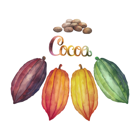 Watercolor cocoa fruit collection isolated on white background. Hand drawn exotic cacao plants in different color Stock Illustratie