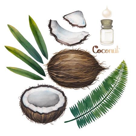 coco: colección de coco acuarela. hojas pintadas a mano, la tuerca y la botella de aceite isolaqted sobre fondo blanco. diseño natural Foto de archivo