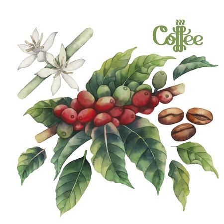 Watercolor koffie set op een witte achtergrond. De hand geschilderde bladeren, bloemen en bonen. bloemendecoratie
