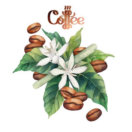 planta de cafe: granos de café y las flores de la acuarela aisladas sobre fondo blanco. decoración floral Foto de archivo