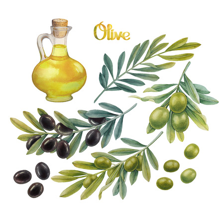 branch isolated: Watercolor green and black olives on the  branches. Olive oil in the glass bottle. Hand painted natural design
