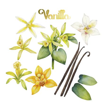 Fleurs Aquarelle de vanille. Main motif floral peint Banque d'images - 58553658