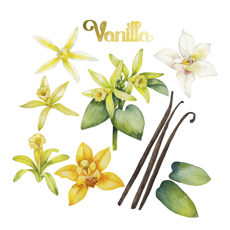 Watercolor vanilla flowers. Hand painted floral design Vectores