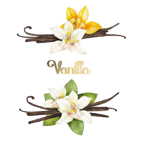 Watercolor vanilla vignettes. Hand painted floral design
