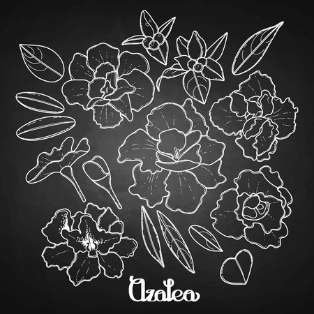 azalea: Azalea leaves and flowers collection. Vector graphic floral decorations isolated on chalkboard