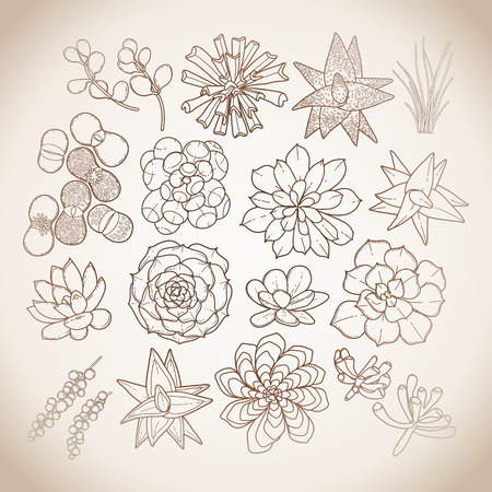lapidary: Graphic isolated succulent collection in brawn colors. Vector floral design Illustration