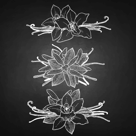 vignettes: Graphic vanilla flowers collection isolated on chalkboard. Vector floral vignettes