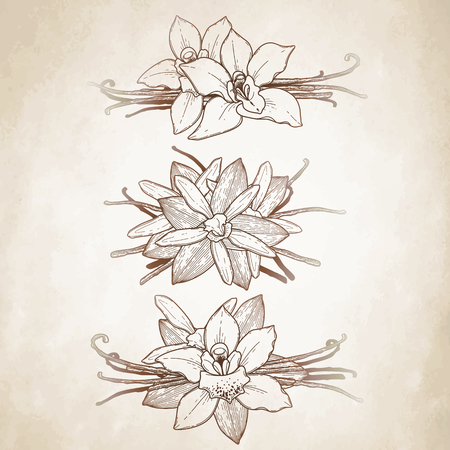 vignettes: Graphic vanilla flowers collection. Vector floral isolated vignettes