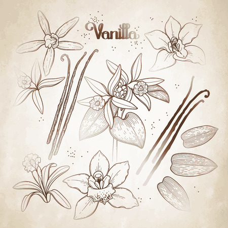 brawn: Graphic vanilla flowers collection isolated on aged paper. Vector floral design elements