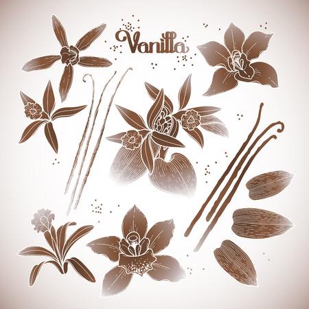 Graphic wanilia kwiaty kolekcji samodzielnie na białym tle. Wektor kwiatowy elementy projektu