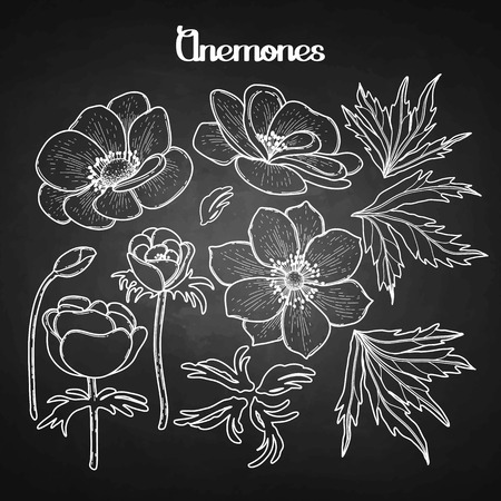 anemones: Collection of graphic anemones. Floral vector decorations isolated on chalkboard