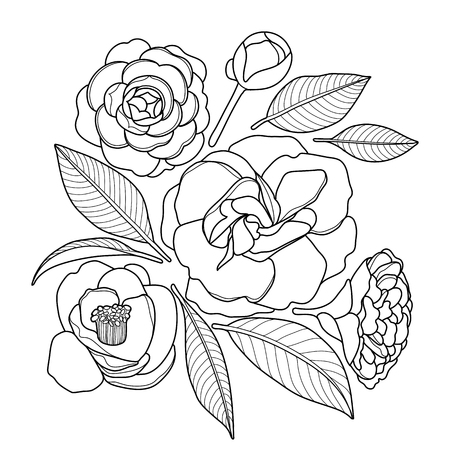 Graphic camellia set isolated on white background Vector floral design. Coloring book page design for adults and kids