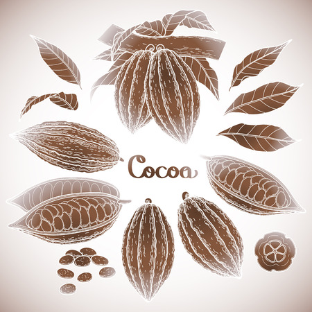 cacao: Graphic cocoa fruit collection isolated on white background. Hand drawn exotic cacao plant in brawn colors
