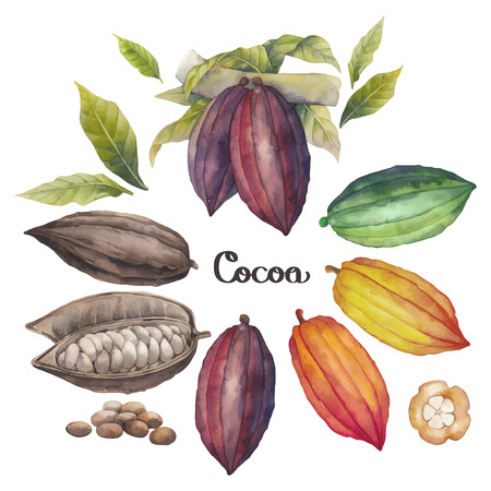 Watercolor cocoa fruit colection isolated on white background. Hand drawn exotic cacao plants  イラスト・ベクター素材
