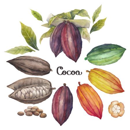 cacao: Acuarela de cacao frutas colección aisladas sobre fondo blanco. dibujados a mano las plantas exóticas de cacao