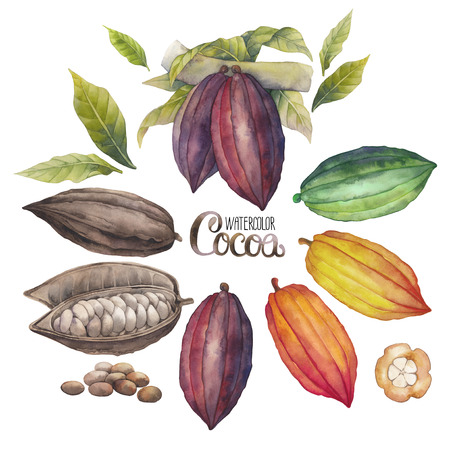 Watercolor cacao fruit colectie op een witte achtergrond. Hand getrokken exotische cacao planten Stockfoto