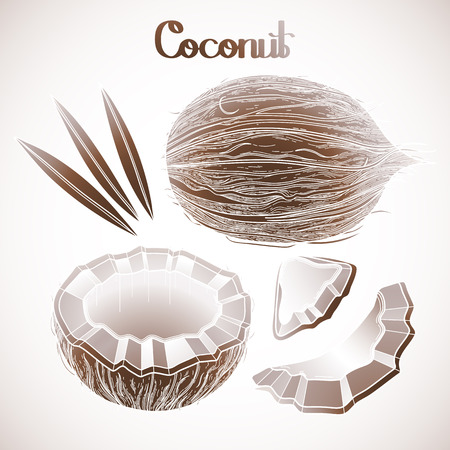 Graphic coconut collection. Hand drawn leaves and nuts isolated on white background Illustration