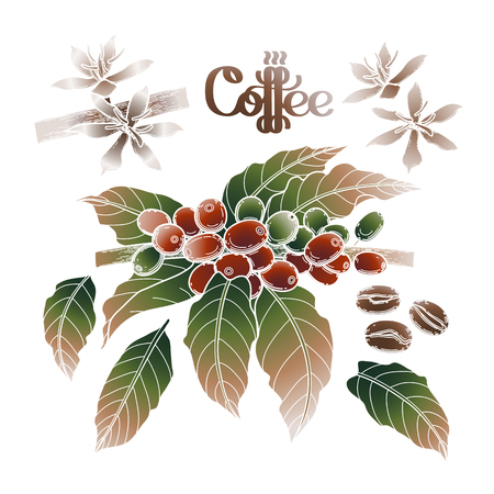 Graphic coffee set isolated on white background. Vector leaves, flowers and beans. Floral decorations Illustration