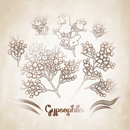 aged: Graphic gypsophila set. Vector floral decorations isolated on aged texture Illustration