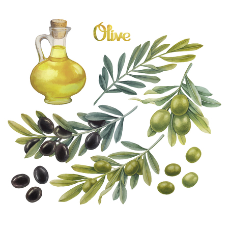 Aquarell grünen und schwarzen Oliven auf den Zweigen. Olivenöl in der Glasflasche. Hand bemalt natürliche Design