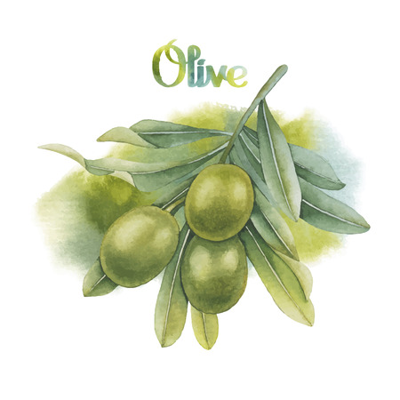 Watercolor green olive branch with watercolor texture on background. Hand painted natural design