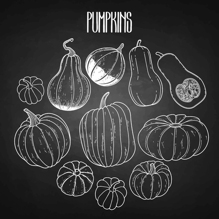 thanks giving: Graphic collection of pumpkins drawn in line art style isolated on the chalkboard. Vector elements for thanks giving day design