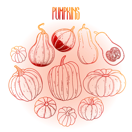 thanks giving: Graphic collection of pumpkins drawn in line art style. Vector elements for thanks giving day design