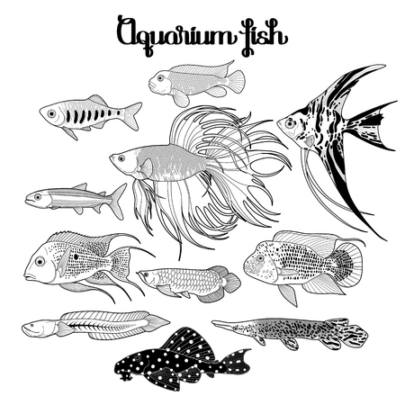 arowana: Graphic aquarium fishes drawn in line art style. Under water scenery isolated on the white background. Coloring book page design for adults and kids.