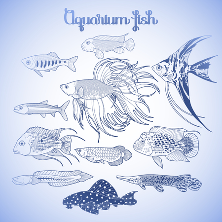 Graphic aquarium fishes drawn in line art style. Under water scenery isolated in blue colors.