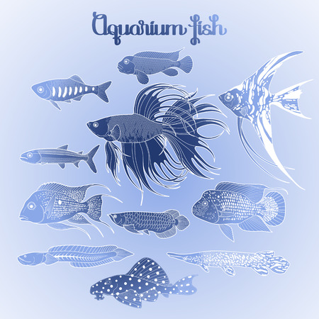 arowana: Graphic aquarium fishes drawn in line art style. Under water scenery isolated in blue colors.