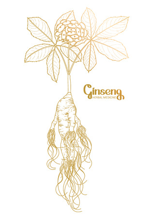 oriental medicine: Graphic ginseng root and berries drawn in line art style. Herbal medicine. Vector plants in golden colors.