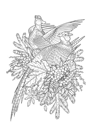 Graphic art with two pheasants, pine and currant branches drawn in line art style. Vector design isolated on white background. Coloring book page design for adults and kids Çizim