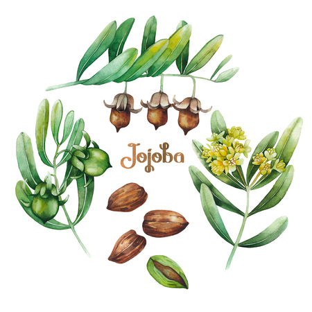 Waterverf jojoba plant