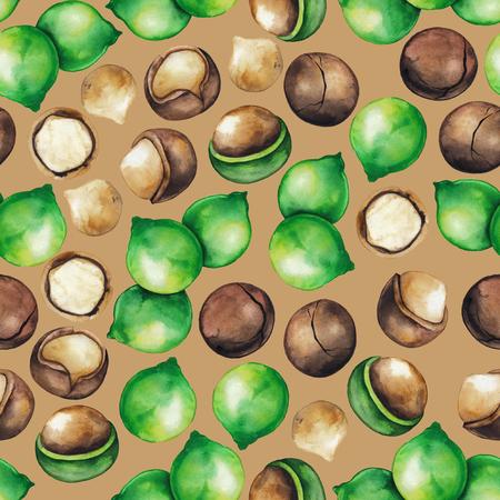 noix de macadamia Aquarelle Banque d'images