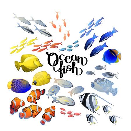 butterflyfish: Graphic ocean fish