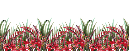 exotica: Watercolor crocosmia border Stock Photo