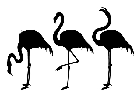 mangy: Cute graphic flamingo Illustration