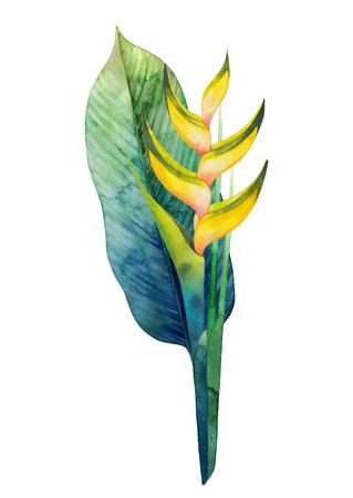 수채화 물감 heliconia 꽃다발 스톡 콘텐츠