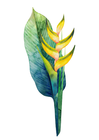 exotica: Watercolor heliconia bouquet Stock Photo