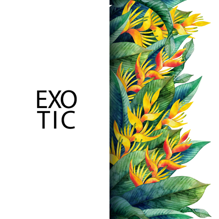 exotica: Watercolor heliconia design