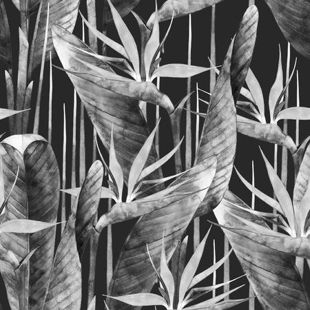 strelitzia: Watercolor strelitzia pattern Stock Photo