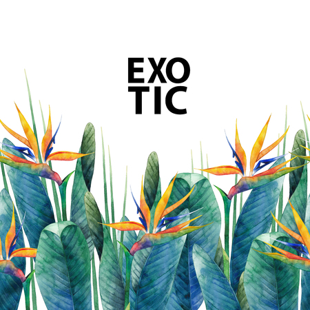 exotica: Watercolor strelitzia card