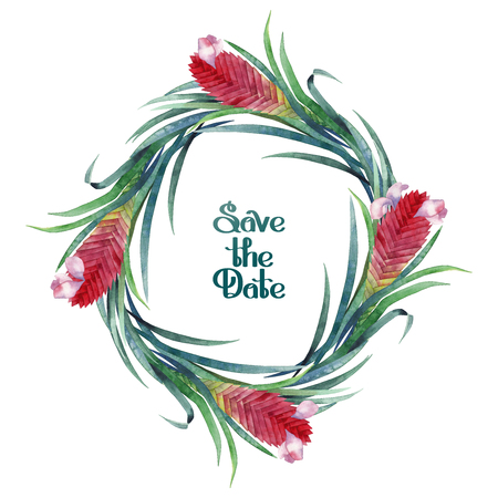 tillandsia: Watercolor tillandsia cyanea wreath Stock Photo