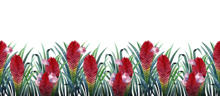 exotica: Watercolor tillandsia cyanea card Stock Photo