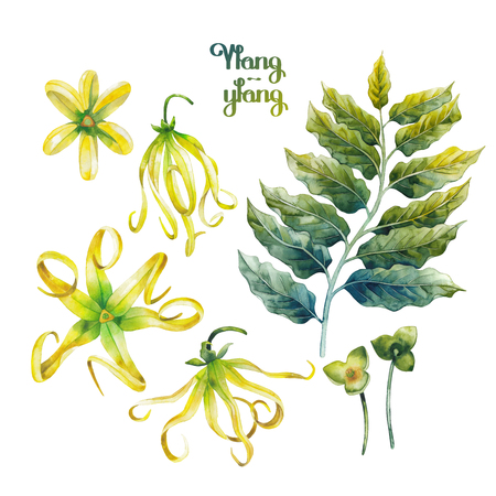 exotica: Watercolor ylang ylang set Stock Photo