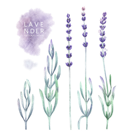 Watercolor lavender collection Stock Photo